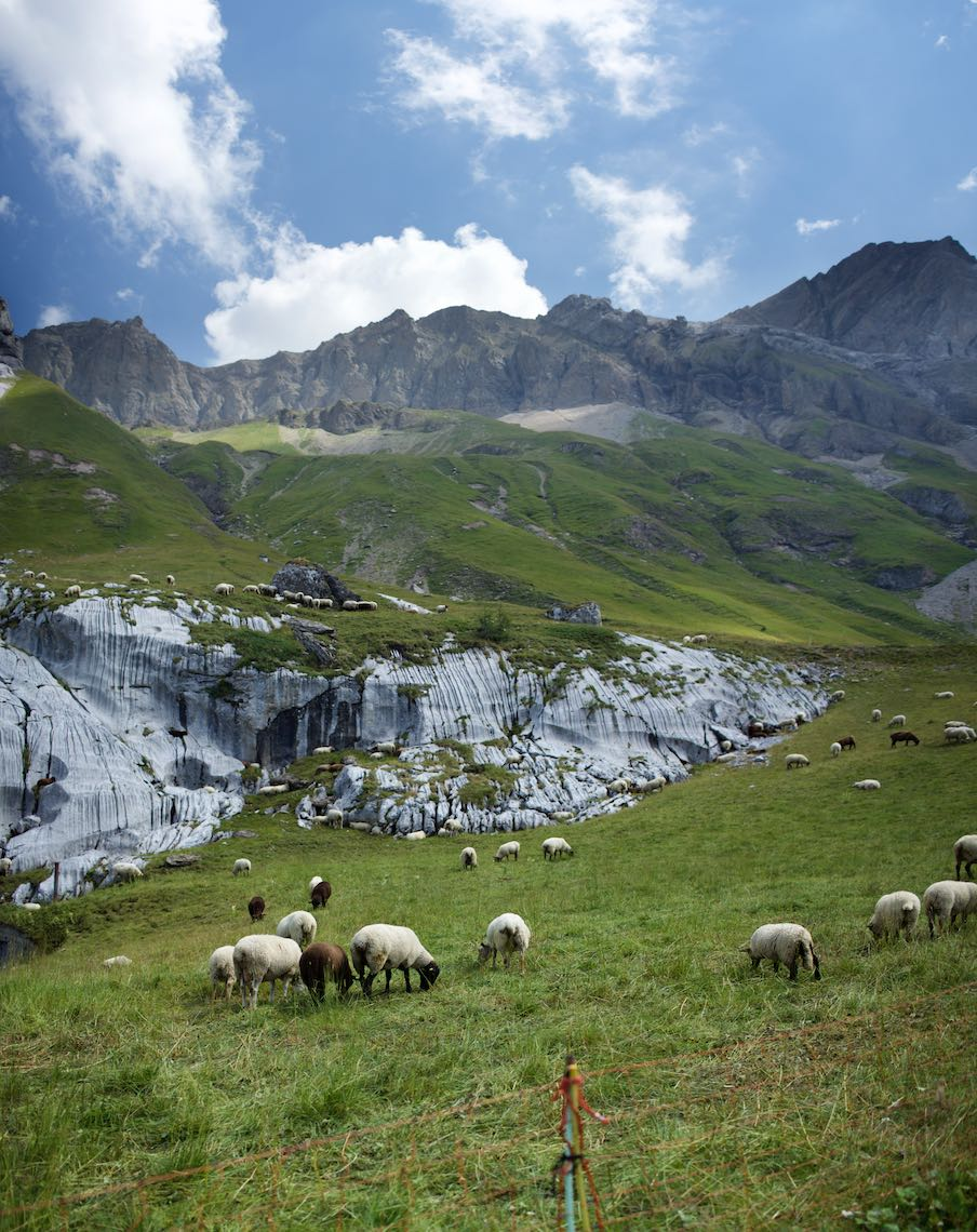 Alpine_herd_jpg